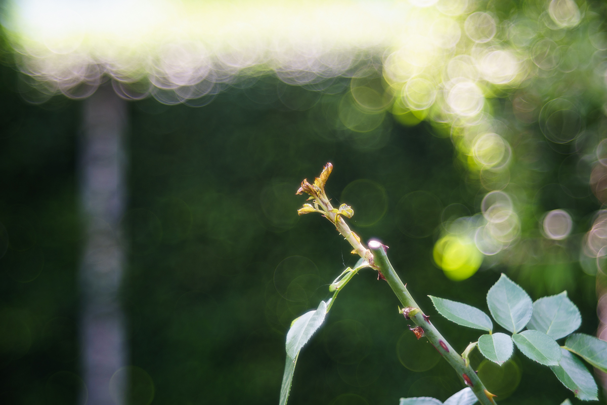 Meyer Optik, Trioplan-N 100/2.8   test and some thoughts for review